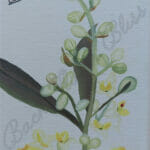 Olive Painting