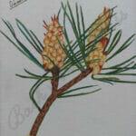 Pine Painting